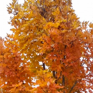 The beauty of the Ozark's Fall foliage at its peak is something to behold.