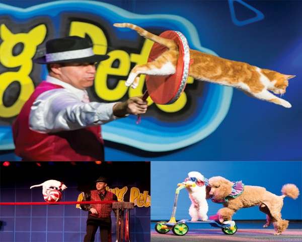 """The """"Amazing Pets"""" in action."""